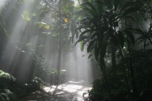 mystical_rainforest_path_1